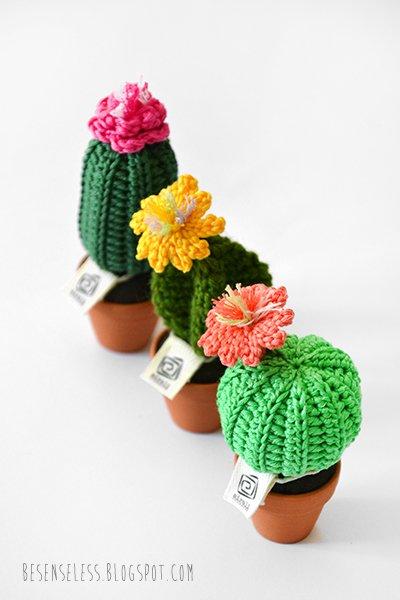Gli ultimi cactus dellestate Airali