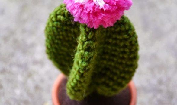 Cactus stella